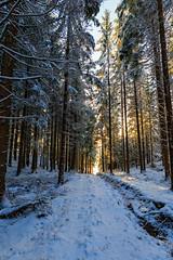 Winter Brightness (Khanghoang2003) Tags: 2017 canonef1635f4lisusm canoneos6d färgelanda kullberg landskap natur skog snö sol solljus träd vinter lillesäter västragötalandslän sverige se