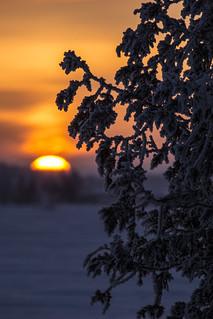 Rural Winter Sunrise