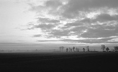 Winter fields (Rosenthal Photography) Tags: nebel landschaft appensen bnw schwarzweiss 35mm bäume asa400 pflanzen ff135 feld 20171202 ilfordhp5 bw olympus35rd analog rodinal150 morning mist fog landscape nature mood dezember winter autumn olympus olympus35 35rd fzuiko zuiko 40mm f17 blackandwhite ilford hp5 hp5plus rodinal 150 epson v800