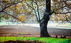 Under the tree (dtavlikos) Tags: nikon f4 kodak cp200 colorplus grainpeeper landscape tree 300mm macedonia greece hellas μακεδονία ελλάδα makedonia macedoniagreece timeless macedonian macédoine mazedonien μακεδονια македонија