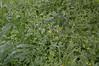 Ψίνθος (Psinthos.Net) Tags: ψίνθοσ psinthos nature countryside φύση εξοχή ιανουάριοσ γενάρησ january winter χειμώνασ απόγευμα afternoon απόγευμαχειμώνα χειμωνιάτικοαπόγευμα greens χόρτα χωράφι field wildflowers άγριαλουλούδια αγριολούλουδα λουλούδια flowers yellowblossoms κίτριναάνθη άνθη blossoms κιτρινάκια καλέντουλα calendula άγριαφυτά φυτά plants wildplants raindrops water drops σταγόνεσ νερό σταγόνεσβροχήσ