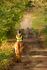 Winter Sun! (paulapics2) Tags: woodland forest pony horse depthoffield setthorn newforest gate rider sunlight afternoon january winter wintersun canoneos5dmarkiii canonef70300mmf456lisusm
