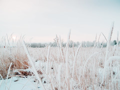 After snowstorm (Andrei Grigorev) Tags: landscape winter grass field trees nature snow sun light print