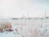 After snowstorm (Andrei Grigorev) Tags: landscape winter grass field trees nature snow sun light print