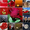 My last best of photos - by Eagle1effi, Germany (eagle1effi) Tags: fdsflickrtoys bestof flickr photos eagle1effi mosaic collage mylifearoundme