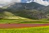 Castelluccio, Monti Sibillini (Marte Visani) Tags: montisibillini castellucciodinorcia fiori primavera
