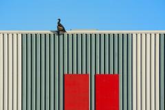 Building and a cormorant (Jan van der Wolf) Tags: map166210v panels red lines lijnen bird aalscholver vogel cormorant gevel facade gebouw