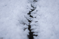 Teeth (thejeffriesn) Tags: snow winter ice crystal microscopic intricate fancy tiny cold freezing frozen water structure