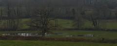 7 - ...Etalement (melina1965) Tags: 2018 janvier january bourgogne saôneetloire saintvallier burgondy nikon coolpix s3700 hiver winter arbre arbres tree trees campagne opencountry