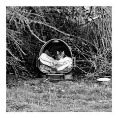 my secret place (japanese forms) Tags: ©japaneseforms2018 ネコ ボケ ボケ味 モノクロ 日本フォーム 黒と白 bw blackwhite blackandwhite blancoynegro candid cat cats gato gatto jonimitchell kat kater katje katze monochrome mysecretplace neko pussy random schwarzweis square squareformat strasenfotografie straatfotografie streetphotography vlaanderen zwartwit