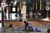 _DSC0759 (lnewman333) Tags: myanmar burma sea southeastasia asia lake freshwaterlake inlelake buddhism buddhist ngaphekyaung jumpingcatmonastery monastery feline cat monk buddhistmonk woman shanstate nyaungshwe