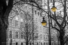 yellow lamps.jpg (MichalKondrat) Tags: szczecin drzewo grudzień lampa city czarnobiałe miasto wałychrobrego urządwojewódzki monochromatyczne blackwhite polska gmach budynek zachodniopomorskie bw poland nikond300s województwozachodniopomorskie pl