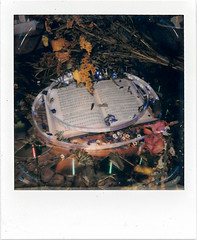 Learning songs (loonyidea) Tags: polaroid songs flowers mess