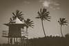 Dreamy (Mr*J) Tags: australia bw nikon beach ocean lifeguard palm tree goldcoast d7200 50mm travel