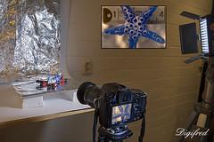 Making of Speckled. (Digifred.nl) Tags: macromondays speckled digifred 2018 hmm nederland netherlands nikond500 makingof macro macrophotography closeup bokeh starfish zeester spikkels vlekkerig sproeterig gevlekt freckled spotted spotty mottled dappled