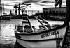 Mouette prétentieuse / Pretentious seagull (vedebe) Tags: bateaux port ports oiseaux animaux mouette mouettes seagull mer méditerranée noiretblanc netb nb bw monochrome ville city rue street urbain urban