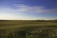 Minimalist landscape with daisies - Paisaje minimalista con margaritas (ricardocarmonafdez) Tags: paisaje landscape minimalist green blue clouds nubes cielo sky color sunlight margaritas daisies edition processing effect 60d 1785isusm canon
