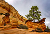 A Tree Set in Rock (jthight) Tags: autumn stgeorge landscape pine northamerica canyon nationalpark mountains landform formation fall rocks nikond810 trees fallcolors beautiful utah rock clouds zionnationalpark sky afzoom2470mmf28g unitedstates october lightroom usa