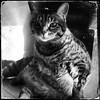 Et si j'allais faire une sieste ?... (woltarise) Tags: chatte home rosemont montréal hipstamatic littledoglaughednoiret