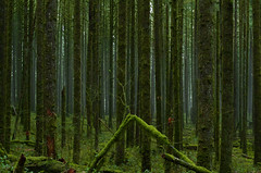 Cold January Breeze (Kristian Francke) Tags: green tree trees outdoors nature pentax moss bc canada british columbia landscape landscapephotography photography naturephotography january mist fog