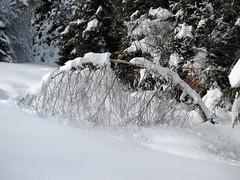 Kot harfa / Like harp (Damijan P.) Tags: zima winter sneg snow pohorje trijekralji slovenija slovenia prosenak
