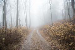 20171223 (Homemade) Tags: fog woods forest trees preserve trail hike path nikon2470mmf28 nikkor2470mmf28 westchestercounty westchesterlandtrust lewisboro southsalem leonlevypreserve ny newyork