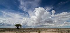 Namibia Etosha National Park (Sas & Rikske) Tags: namibia etosha national park namibiaetoshanationalpark sky clouds canon1022 efs tree landscape landschap afrikaanslandschap africanlandscape wide white plant cumulus wolk wolken nuage nuages canon eos1d x canoneos1dx canon100400 eric bruyninckx riksketervuren namibië namib animal animals safari africa afrika etoshagamepark game etoshapan pan greatwhiteplace great place oshindonga ndonga green blauwevogelreizen 2017 efs1022mm