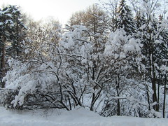 wintry wonderland (VERUSHKA4) Tags: wood park nature neve neige vue view outdoor city ville cityscape white blanc bush trunk firtree february canon europe russia moscow day verdure bough branch hiver winter brown black astoundingimage