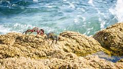 DSC_0472 (hanaidh) Tags: nature beach sea crap