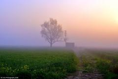 The Aura of Morning Fog (Simranpreet Singh Gill) Tags: yellow flower mustard wheat field fog risingsun glow morning