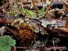 Jelly Fungi (Bugldy99) Tags: fungus nature mushroom toadstool