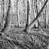 mamiya250218009 (salparadise666) Tags: mamiya c330 sekor 80mm orange filter fomapan 100 caffenol cl 45min semistand nils volkmer vintage tlr analogue film camera square medium format 6x6 landscape nature trees hannover region niedersachsen germany north german plains