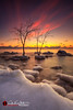 Winter Roots (andrewslaterphoto) Tags: boulderpoint clouds cold freeze greatlakes ice lakemichigan landscape longexposure milwaukee nature outdoors snow sunrise tree winter rooted canon 5dmarkiii discoverwisconsin travelwisconsin visitwisconsin mke rocks