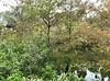 Egrets at rest (LarryJay99 ) Tags: water smallwater pond wetreflections trees birds egrets whitebirds westpalmbeach florida