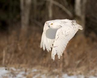 Snowflake in flight