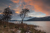 Great Glen Sunset .. (Gordie Broon.) Tags: lochness sunset thegreatglen glenalbyn scottishhighlands scotland ecosse landscape lago lac scenery winter schottland paysage trees silhouettes hugeln dores snow collines colinas sky escocia inverfarigaig invernessshire foyers drumbay see paisaje scozia scenic gordiebroonphotography jezero ilce7rm2 sonya7rmkii sonyzeiss1635f4lens 2018 scenario szkocja caledonia alba sonnenuntergang lecoucherdusoleil atardecer tramonto inverness coastal geotagged