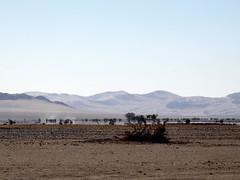 P1030174 (dieter.schultheiss) Tags: namibia naankuse lodge erindi game sossusvlei swakopmund safari cheetah lion gepard oryx dunes elephant elefant wild dog wildhund gnu zebra crocodile krokodil san bushmen buschmänner dead vlei solitaire