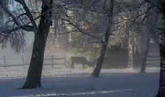 Winter landscape (Daniel Langhammer) Tags: winter vinter gotland sweden sverige winterlandscape