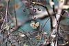 Tiny nature wonderworld (Magreen2) Tags: tair550 hydrangea hortensia flower fadedout cutout winter nature beauty light colours bokeh oldlens tair11a