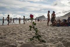 """Sandrose"" Copacabana, Rio de Janeiro, Brasil (MUDILANE) Tags: rose sand copacabana rio riodejaneiro brasil people young beach beachlife leica mlazarevphoto 35mm life"