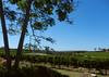 Fertile valley (LeelooDallas) Tags: western australia margaret river island brook estate landscape dana iwachow nikon coolpix s9200 summer 2018 wills domain