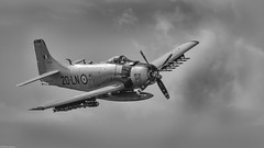 Douglas A1 Skyraider (Michel Images) Tags: douglasah1skyraider airplanes airshow lafertéalais canoneos7d canonef400f56l monochrome