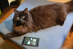 - Do you like my selfie? (Caulker) Tags: cat mobile phone selfie