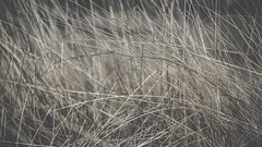 PB_012618_29 (losing.today) Tags: brianyoung oregon pacificnorthwest portland pdx portlandoregon portlandor winter nature outdoors naturepark plantlife plants moodyseason darkseason losingtoday grass grassstudies