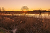 Golden hour (Stefan Sellmer) Tags: schleswigholstein fuhlensee goldenhour landscape sunset goldenlight germany test kiel trees lake strande deutschland de
