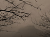 Chartreuse, 2017 (Olivier BERTRAND) Tags: chartreuse arbre blackandwhite blackandwhitephotography digitalphotography forest forêt isère hybridcamera landscape lumix25mm lumix monochrome micro43 noiretblanc nature naturallight olivierbertrand panasoniclumix25mm olympusem5markii olympus 25mm paysage