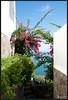 2017-09-07-Isole Eolie-DSC_0023.jpg (Mario Tomaselli) Tags: bougainvillea fiori flower isoleeolie mare panarea sea