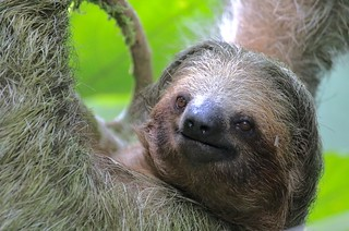 It's all about being a sloth in Costa Rica!