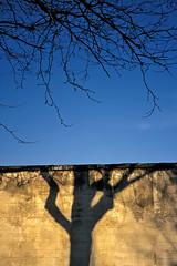 ... (Joseff_K) Tags: diapositive leica arbre tree mur wall ombre shadow slide film inversible ektachrome leicam6 m6 kodakektachrome100 100asa