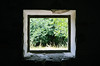 Nature Window (Elisabeth Arvaniti) Tags: nature green trees frame photo photoframe box full snapshot view greece summer pelion magnesia square roadtrip explore window tree